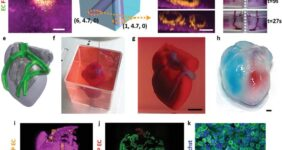 قلب پرینت سه بعدی