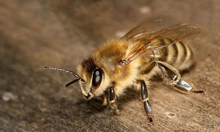 لانه های زنبور پرینت سه بعدی